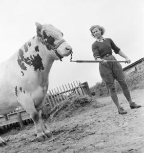 Land_Girl_Iris_Joyce_leading_a_bull_at_a_farm_somewhere_in_Britain_during_1942._D8839